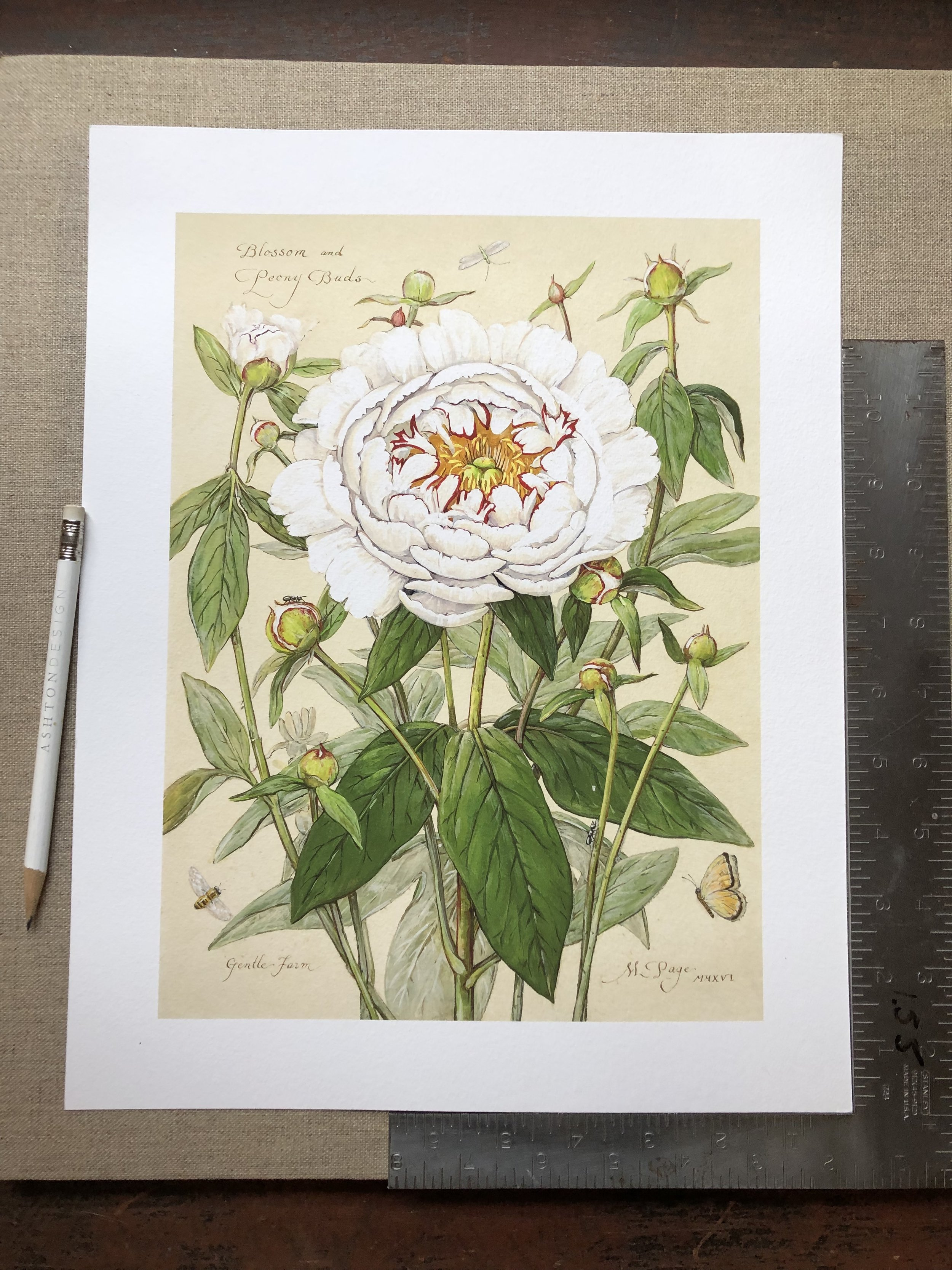 "Peony Blossom with Buds    11""x14"" sheet – $180"