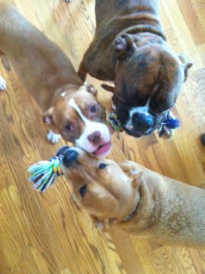 Lucy at Christmas, bossing the boys around (Puck, adopted brother; Onslo, adopted uncle).