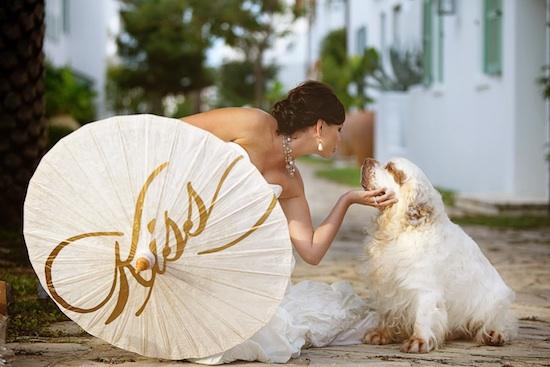 16-bride-parasol-dog.jpg