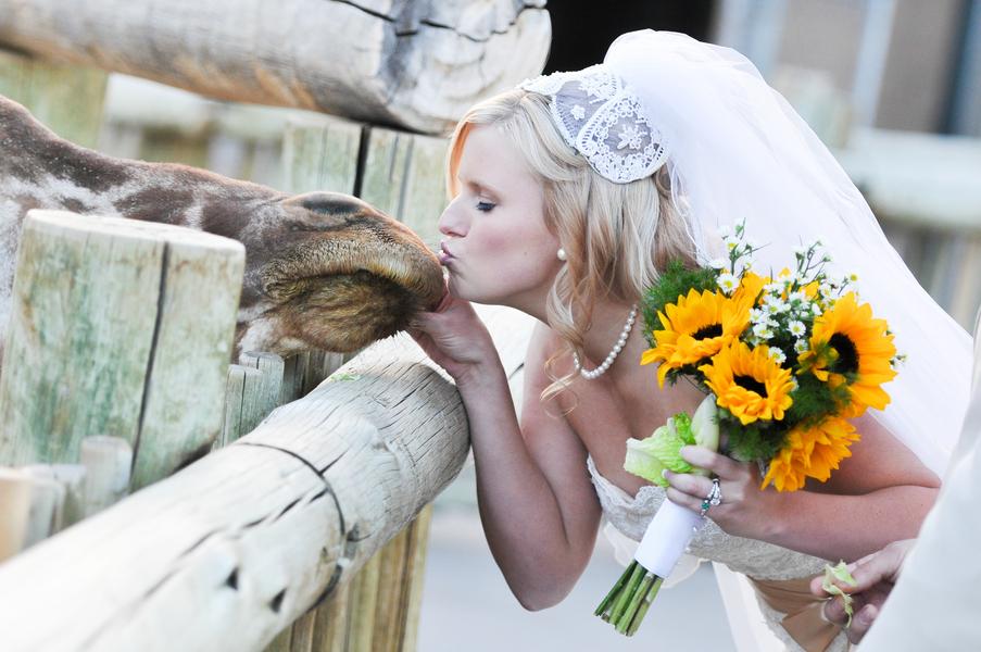 bride kissing a giraffe - the cutest | Cheyenne Mountain Zoo wedding | photo by Trystan Photography