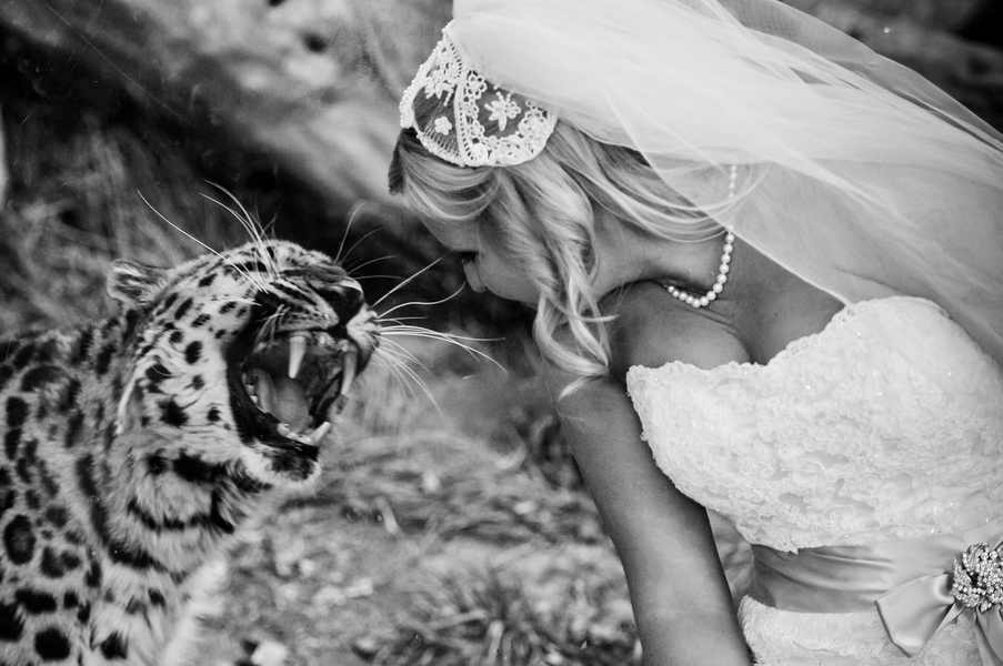 colorado-zoo-wedding-102813-14-leopard.jpg