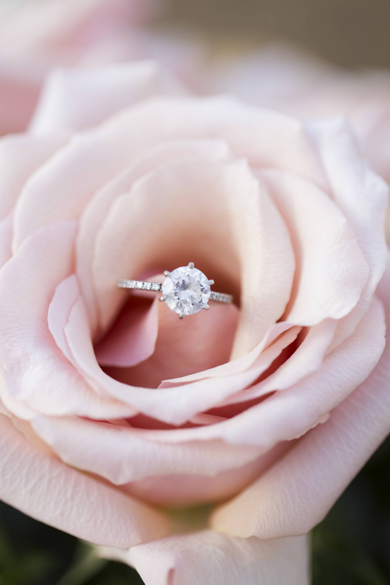 sleepy-hollow-styled-shoot-ring-on-rose.jpg