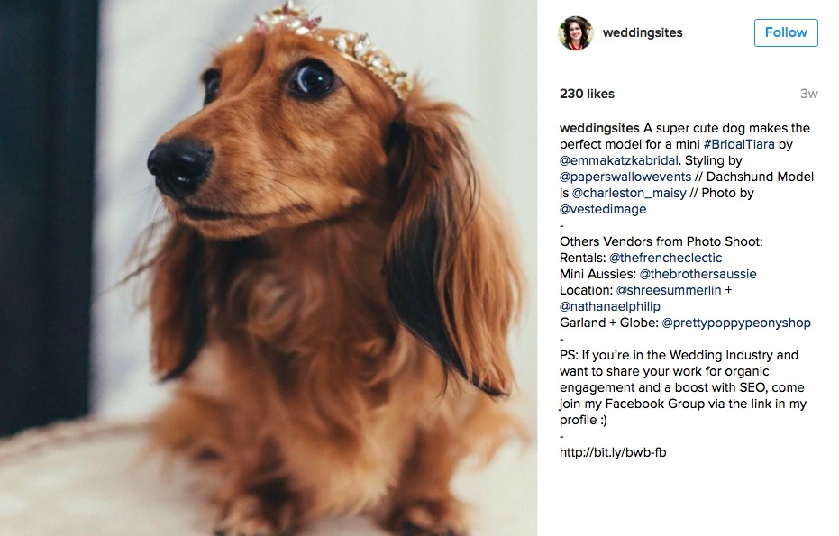 The Prettiest Bridal Tiara modeled by a sweet dog: The Best in 2016 Creative Weddings leads to Hot Wedding Trends for 2017 as seen on www.BrendasWeddingBlog.com / photo by Vested Image / styling by Paper Swallow Events