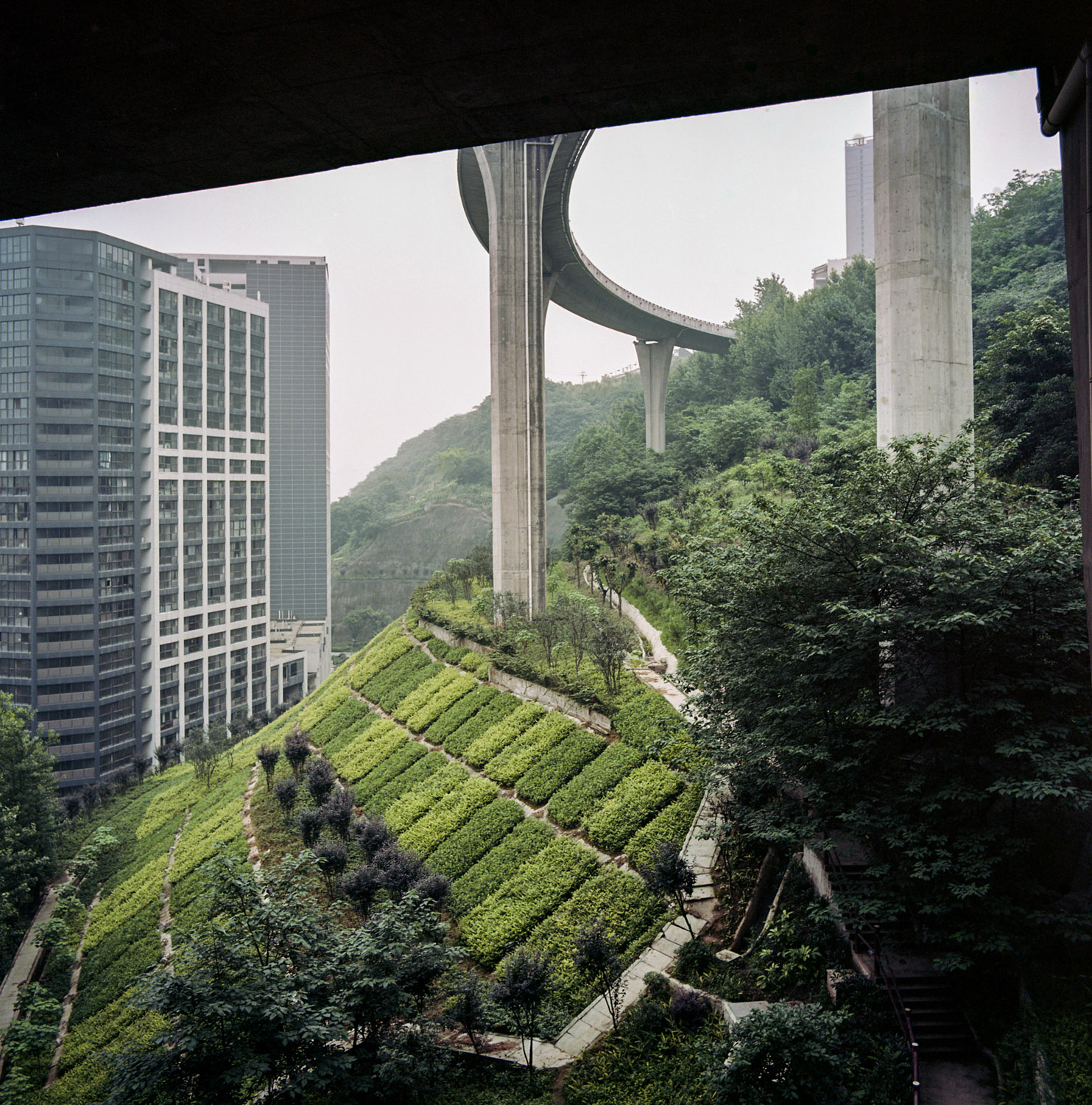 Highway above the forest