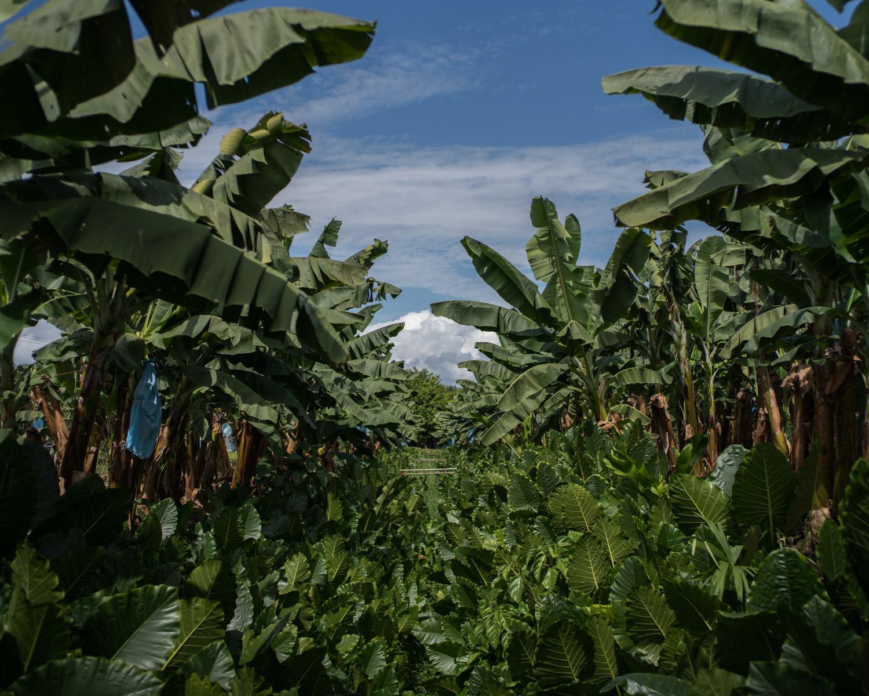 costa-rica-banana-trade-8829.jpg