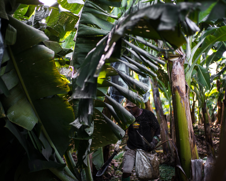 costa-rica-banana-trade-9413.jpg