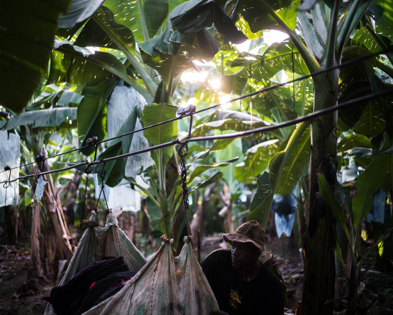 costa-rica-banana-trade-9491.jpg
