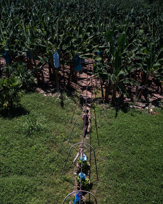 costa-rica-banana-trade-9574.jpg