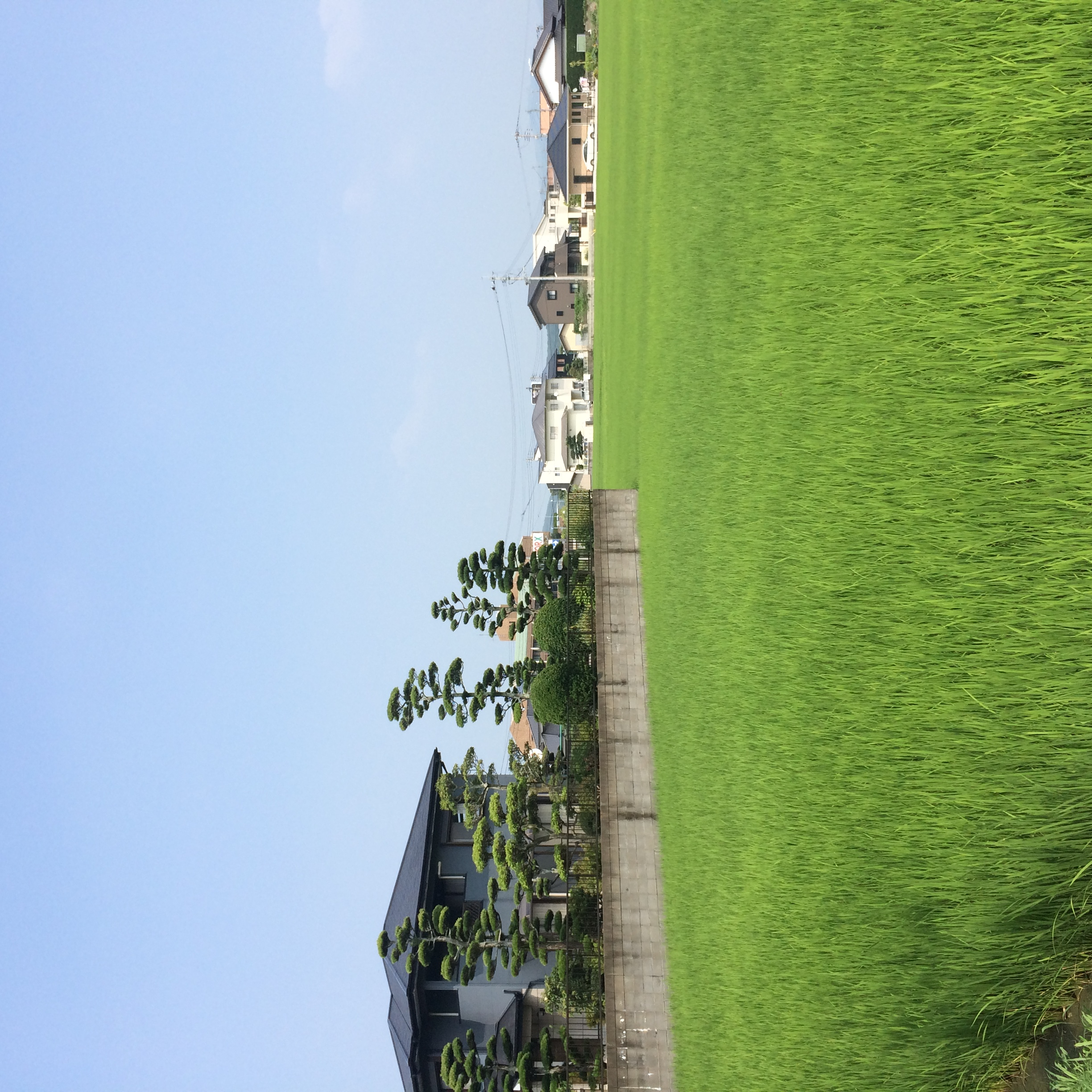 so green, so green those rice fields