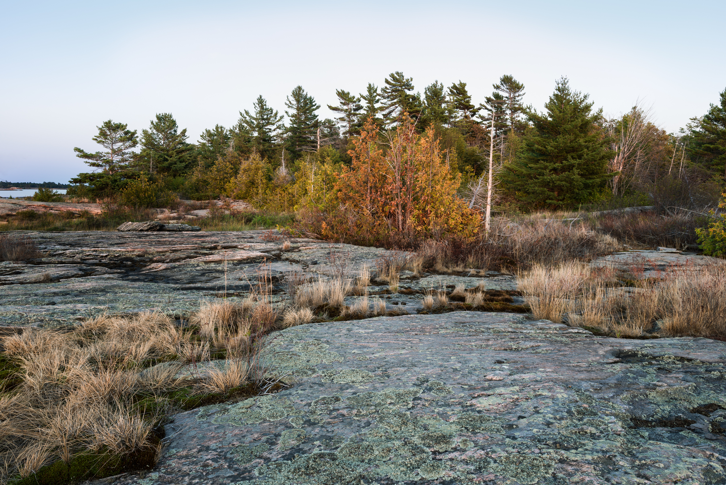 Dead Cedars after 2012 Drought Boundary Islands, Georgian Bay, Canada, UNESCO World Biosphere Reserve