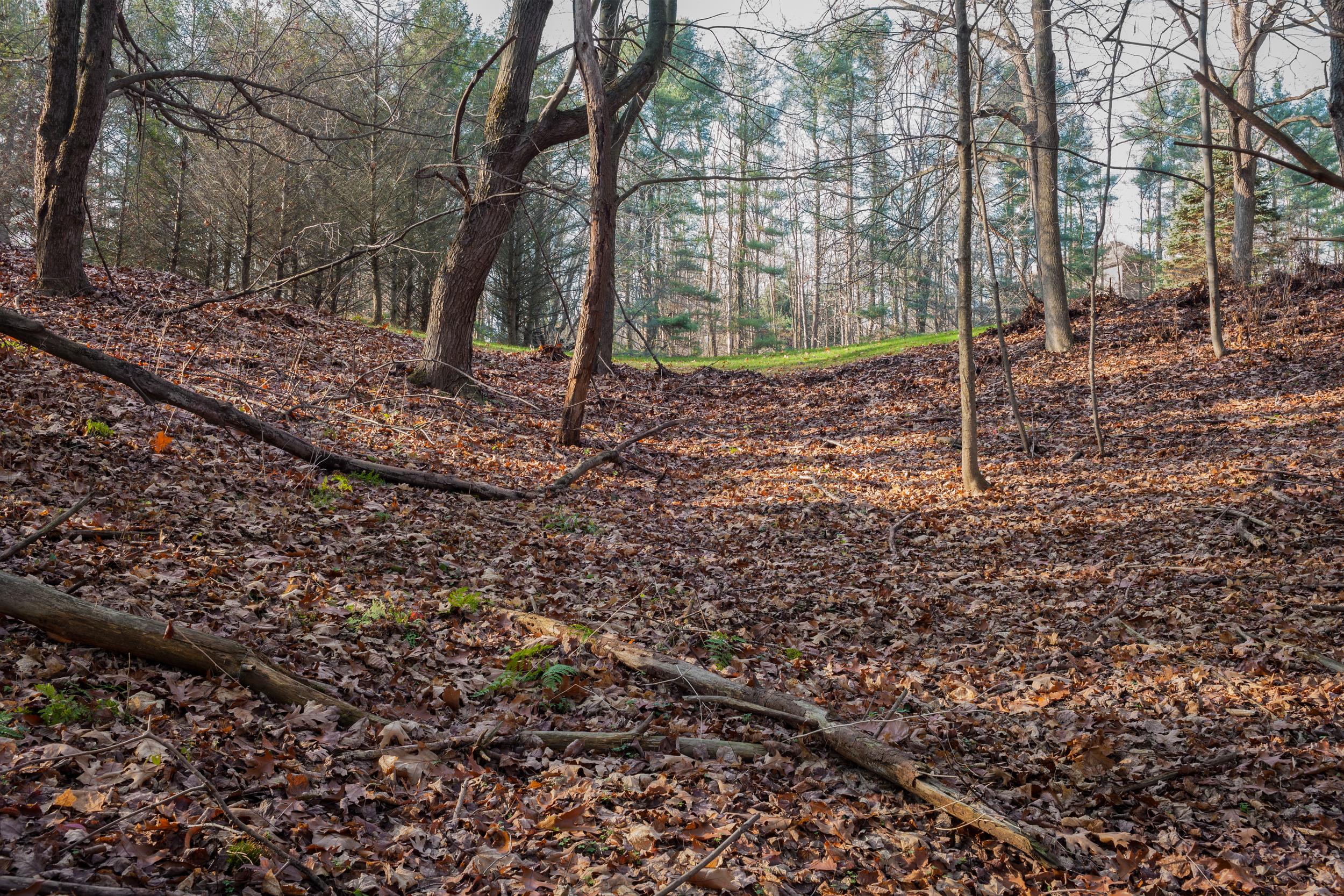 Boundary Line of Landlocked Bentley Woods Preserve