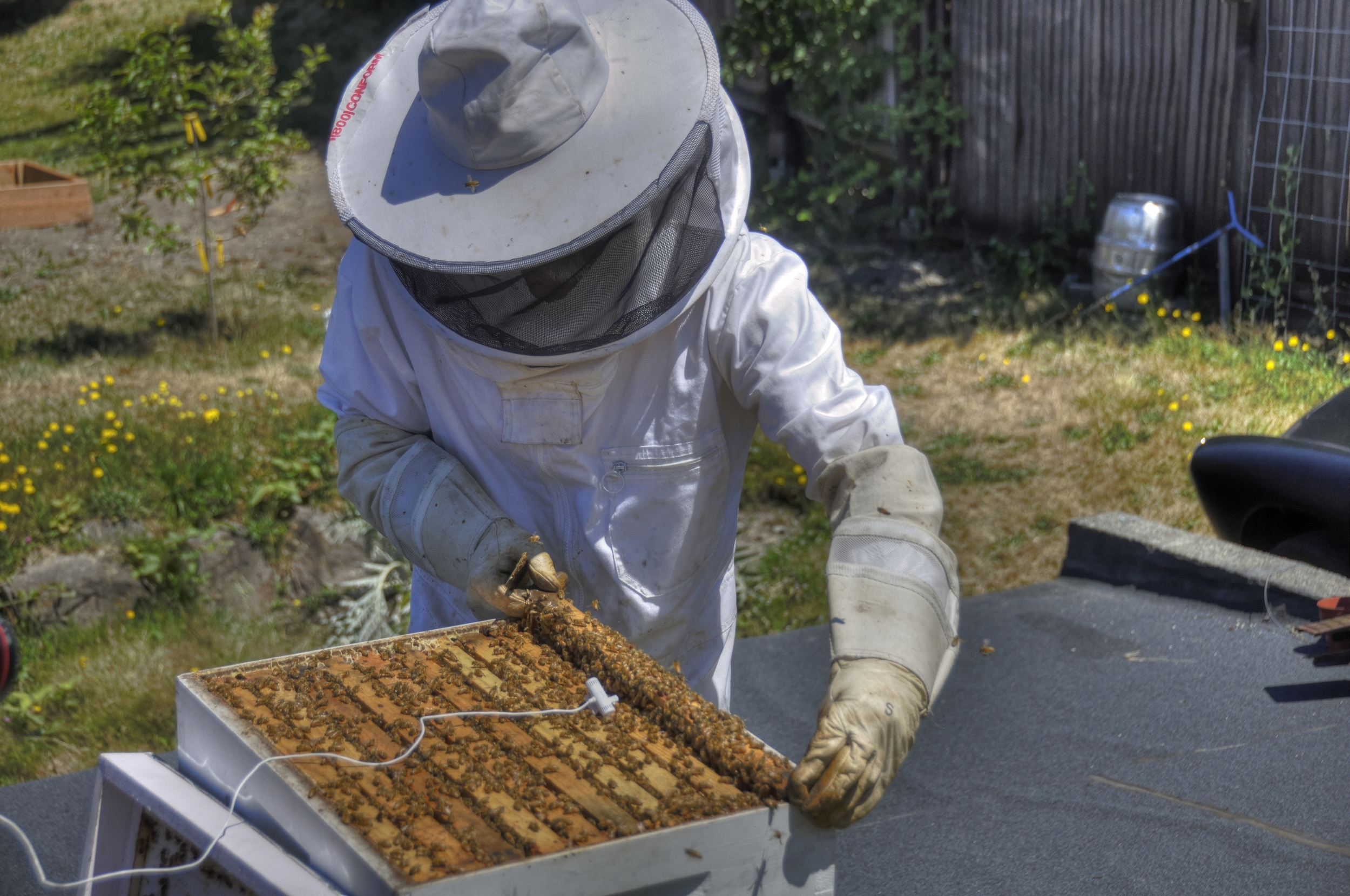 A man and his bees