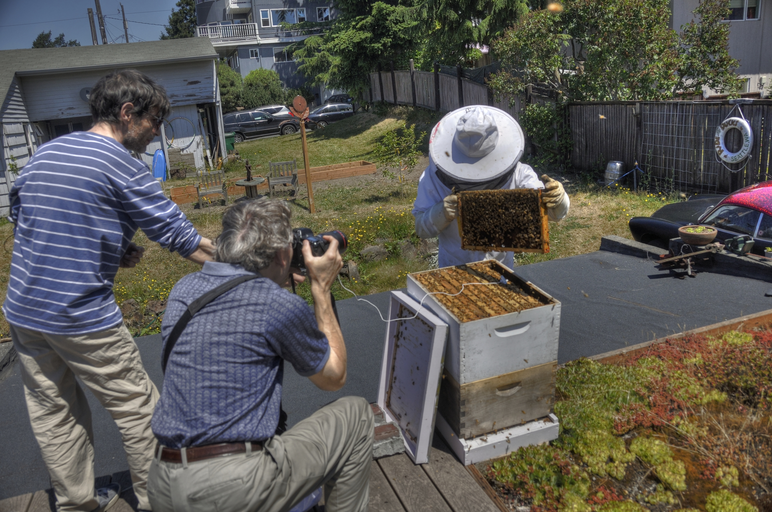Bee action shot