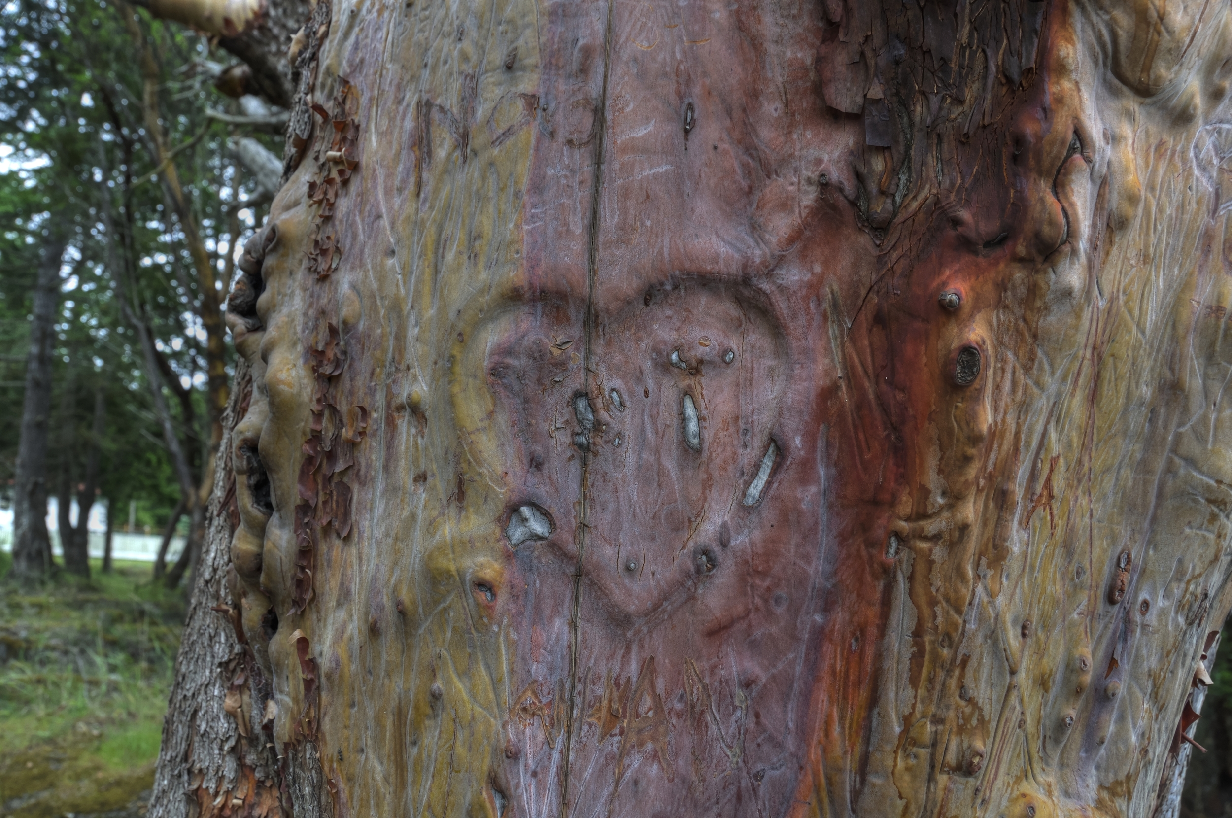 Please don't scar the trees, they are not into the modern primitive movement.