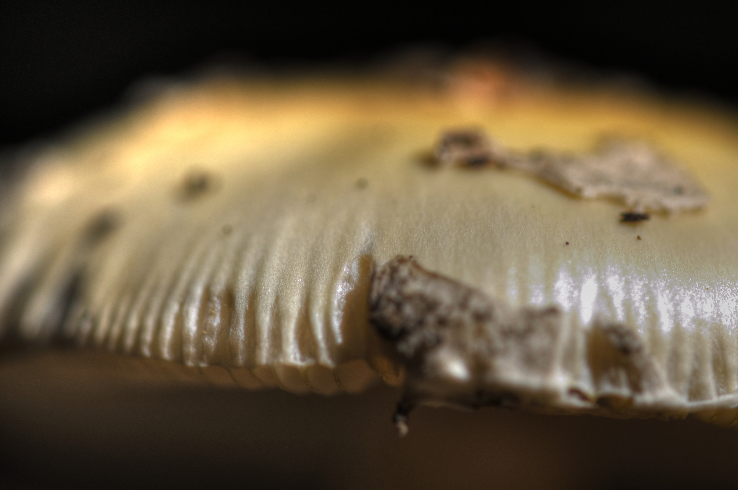 the edge of a mushroom in Hamlin park 2013