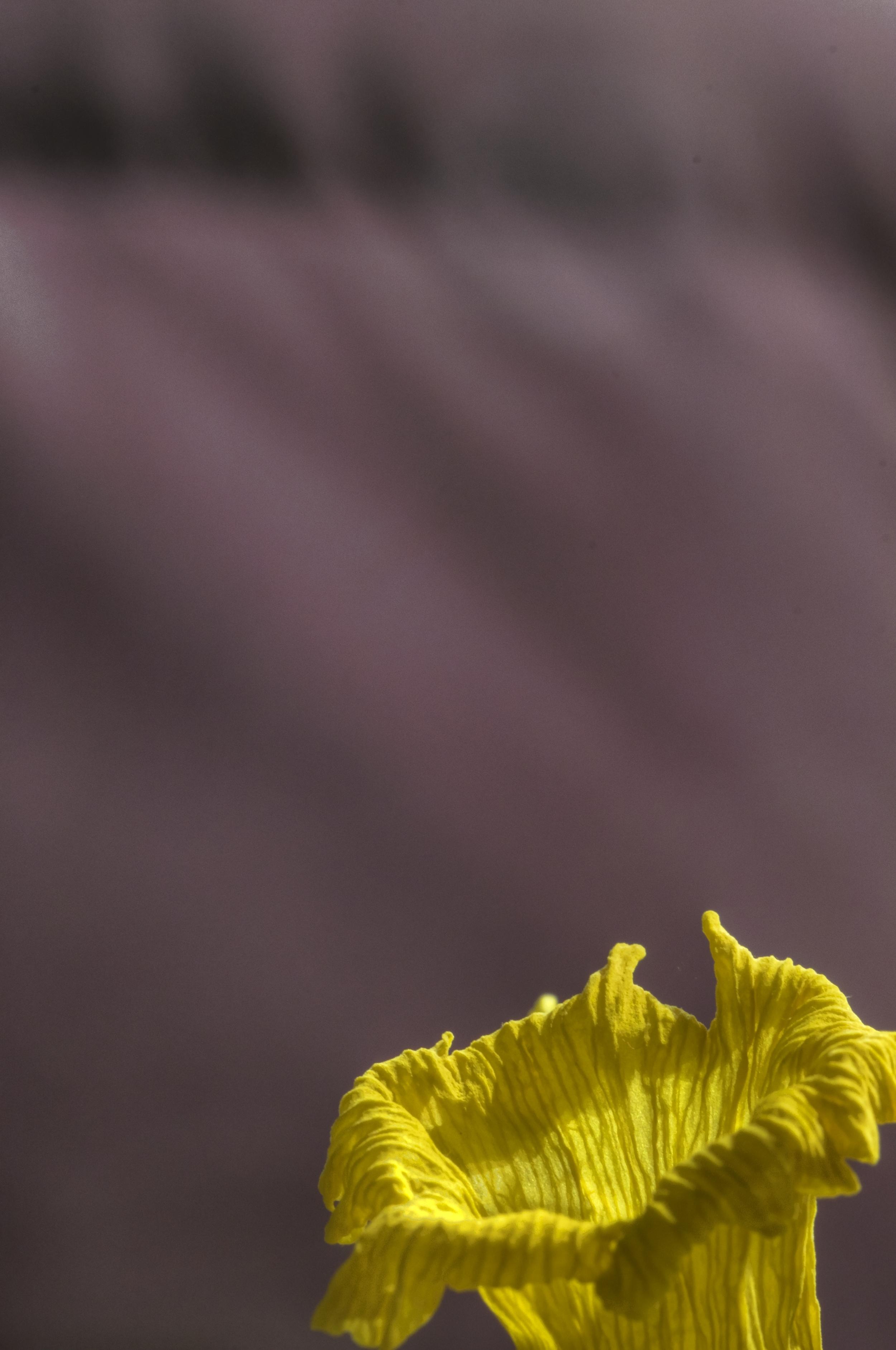 _DSC2543__daffodiltonemapped.jpg