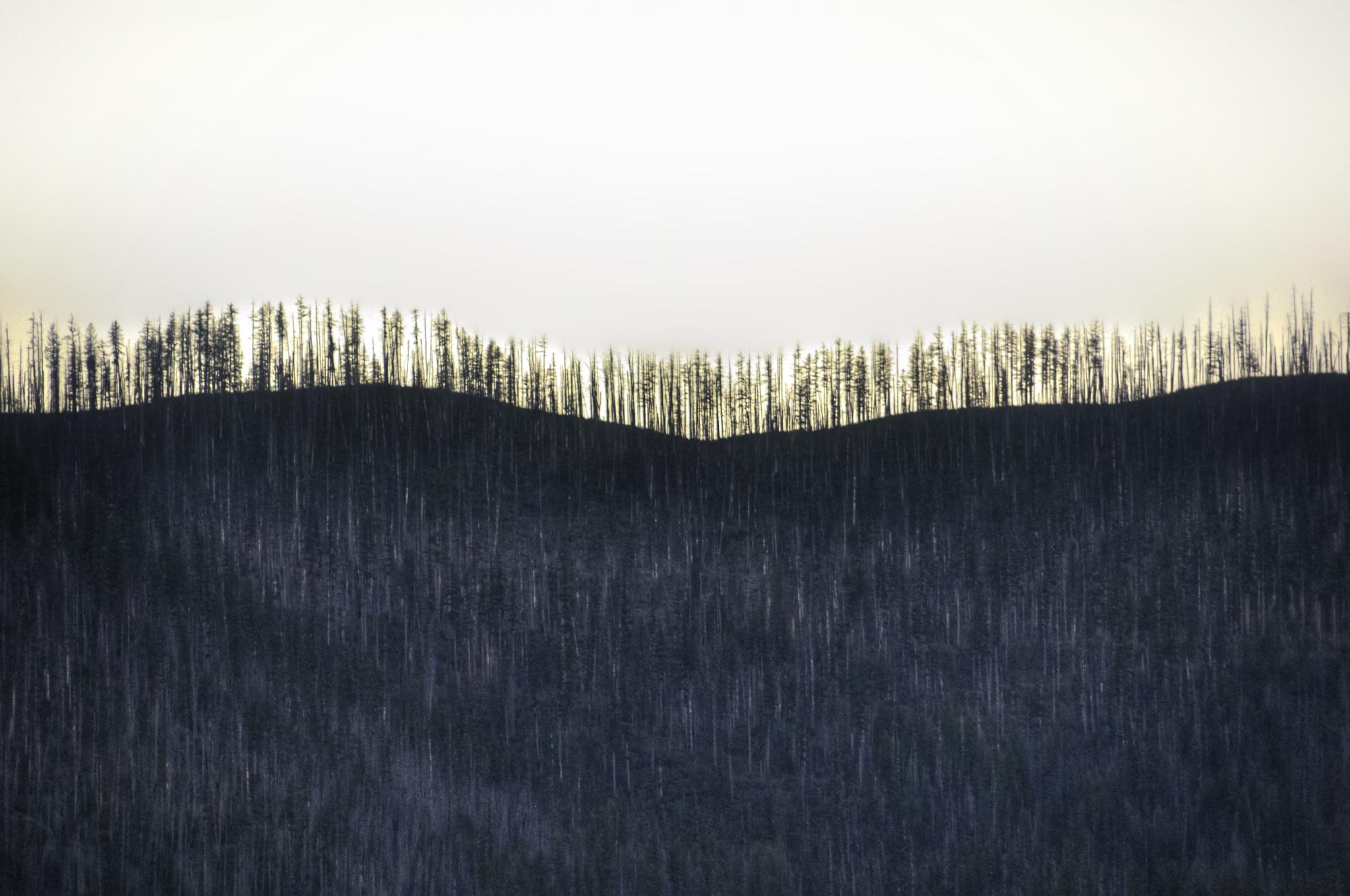 burnt treeline, Montana