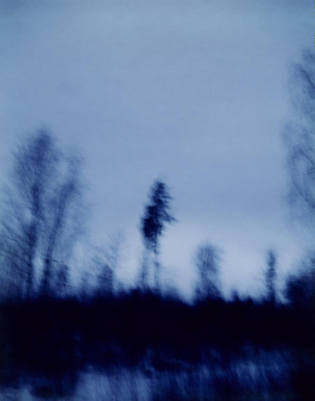 Blurredtreeahead.jpg