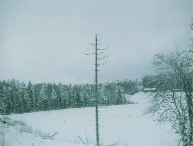Solotree.jpg