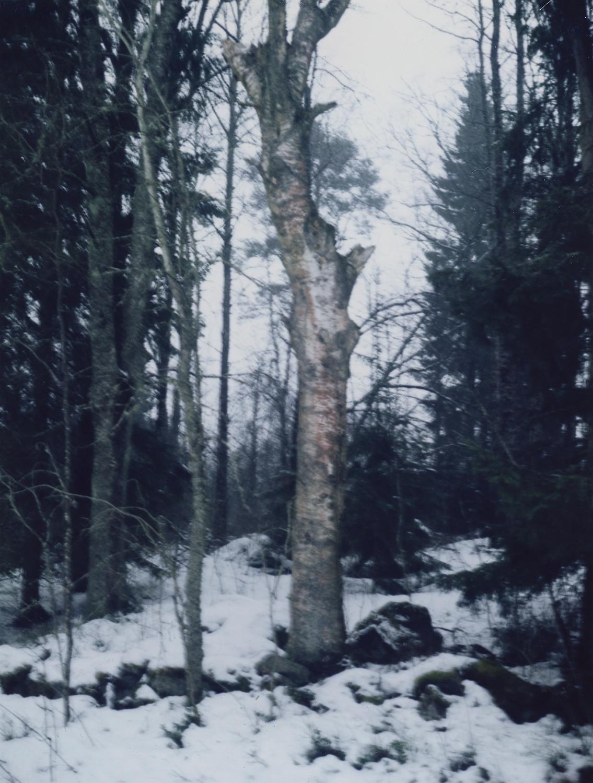 Vert_Tree.jpg