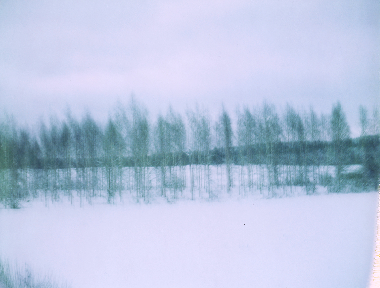 Blurredtrees.jpg