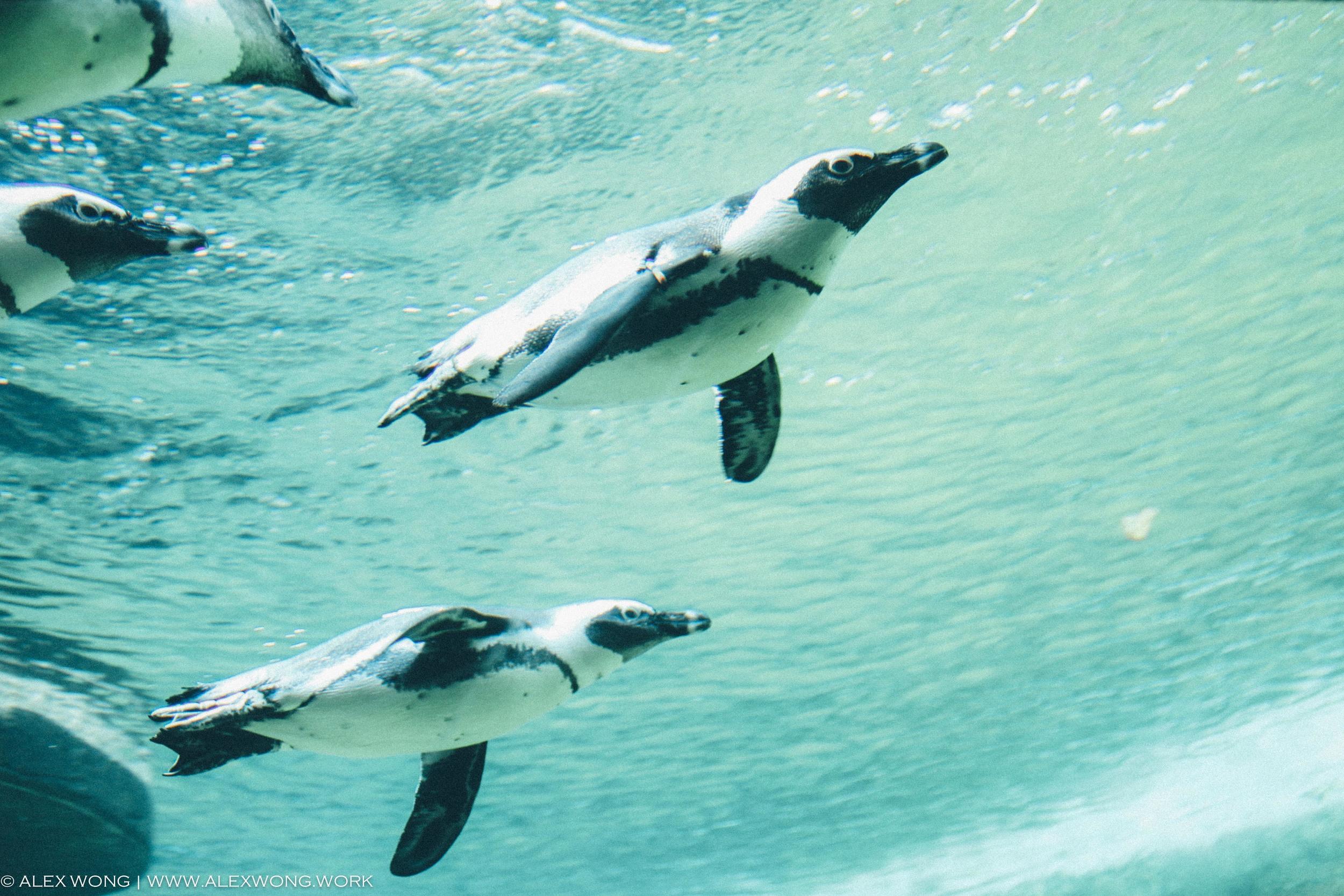 Amsterdam - Penguins.jpg