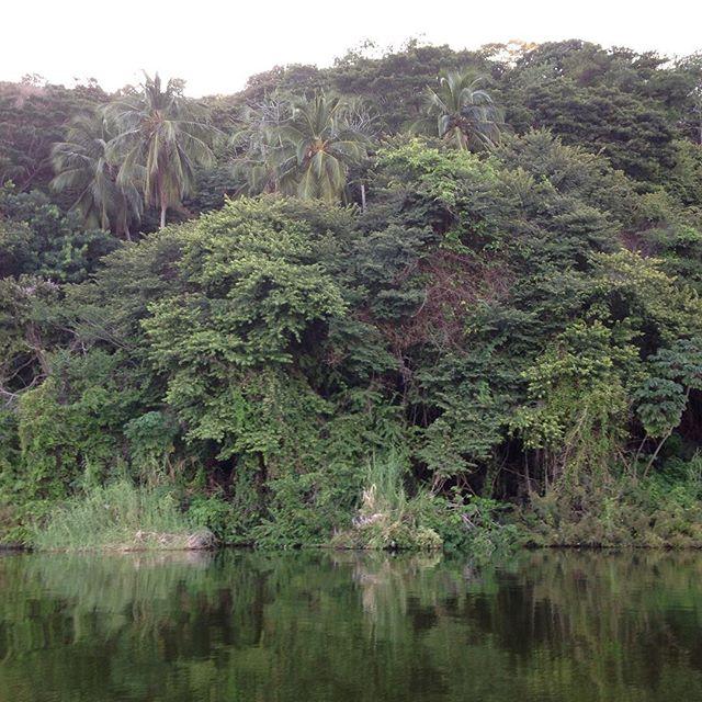 Junglemoon #lunademiel