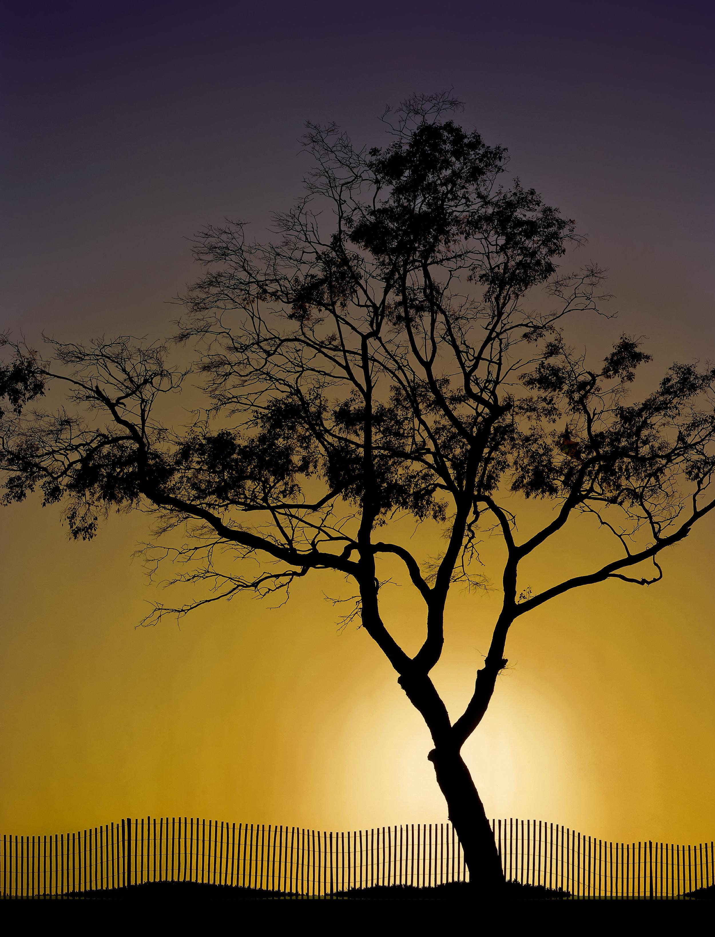 capinteria_tree.jpg