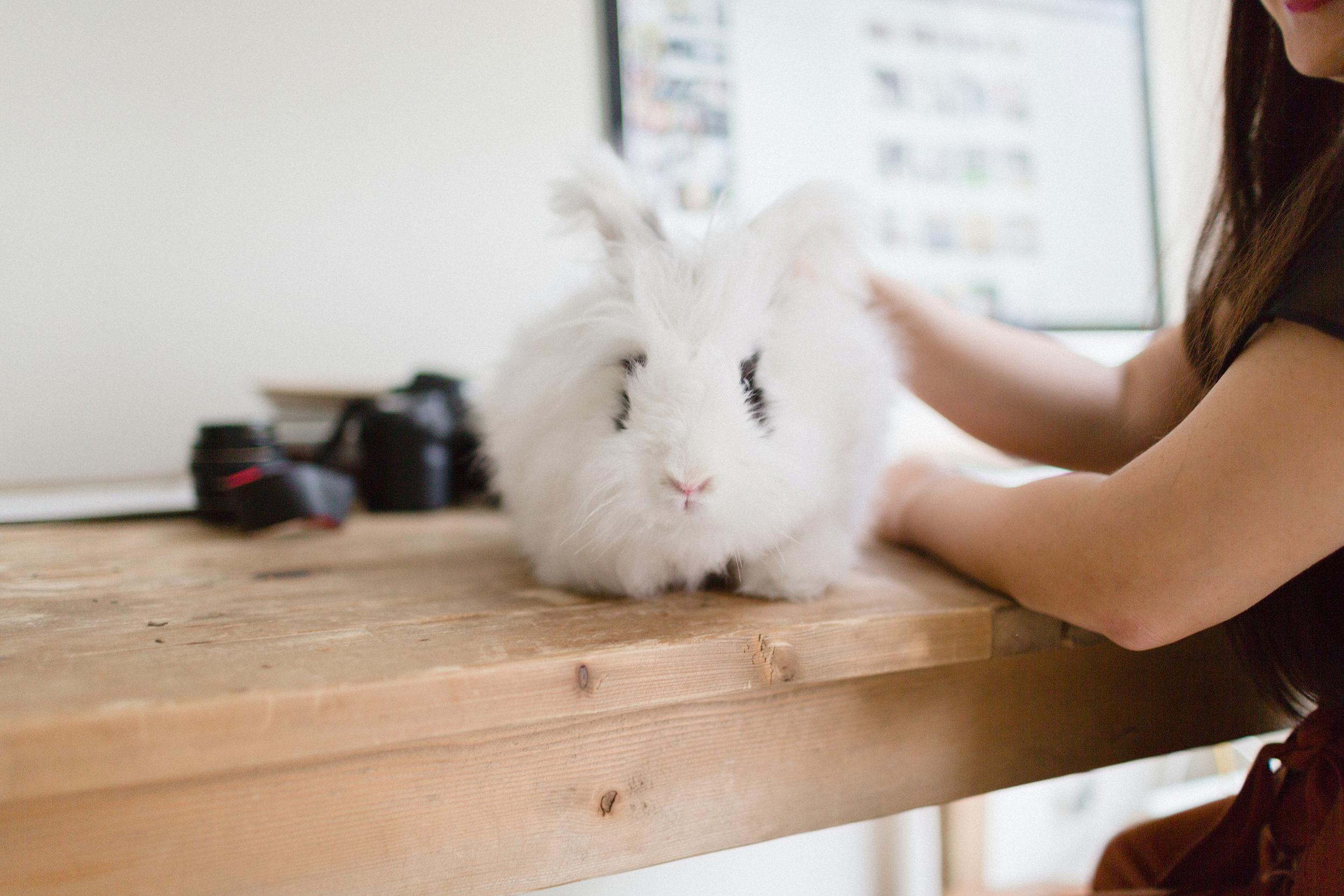 Diana Yen & Cleo the Bunny