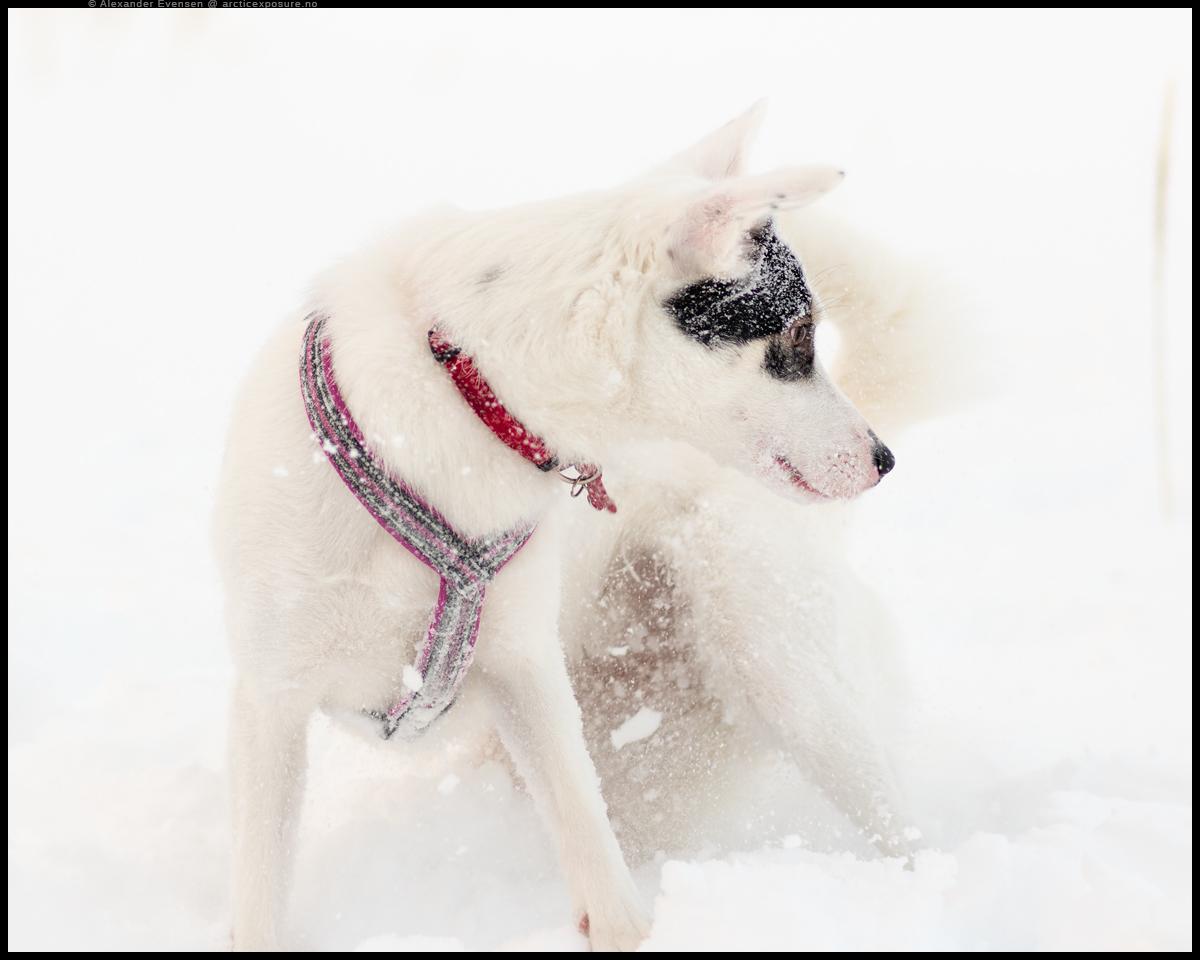 Luna in Heavy Snowfall