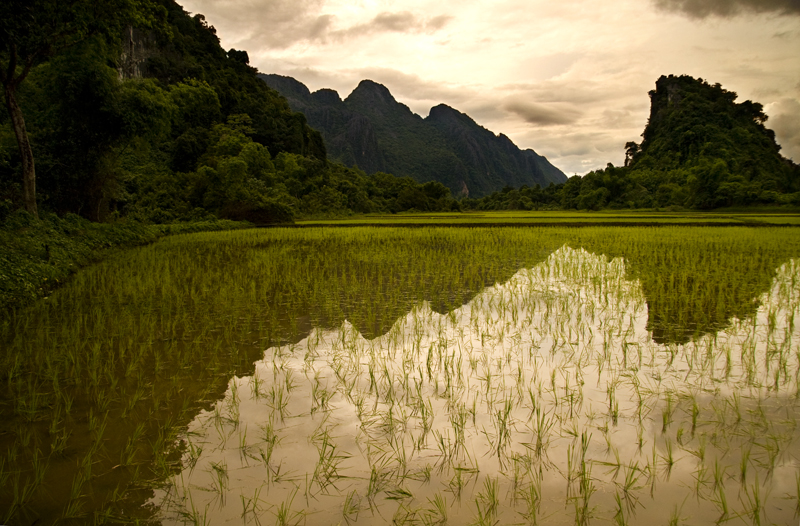 Rice fields near Vang Vieng, Laos