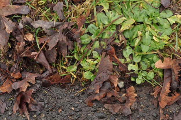 leaves sidewalk