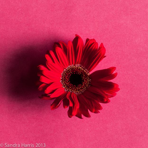 graphic flowers photography styling - Sandra Harris