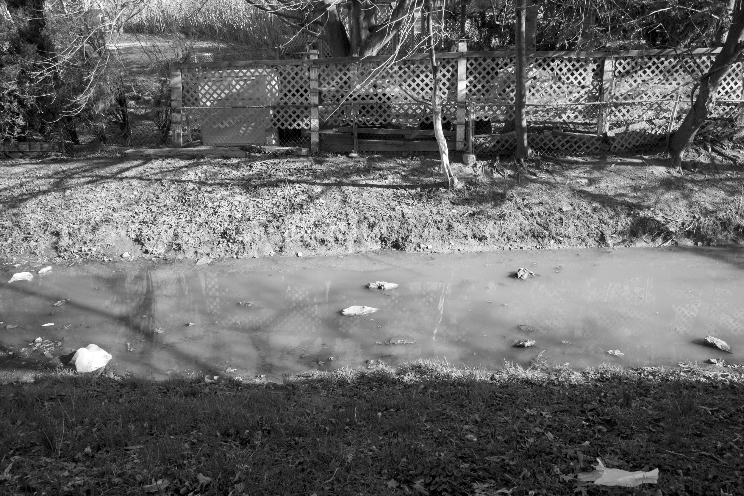 jonasbackyard.jpg