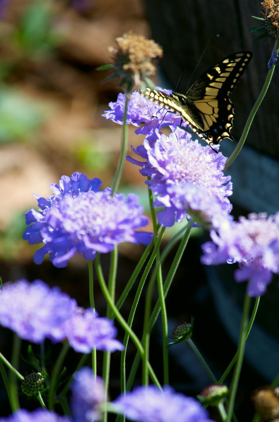 berkeleyrebel_butterfly.jpg