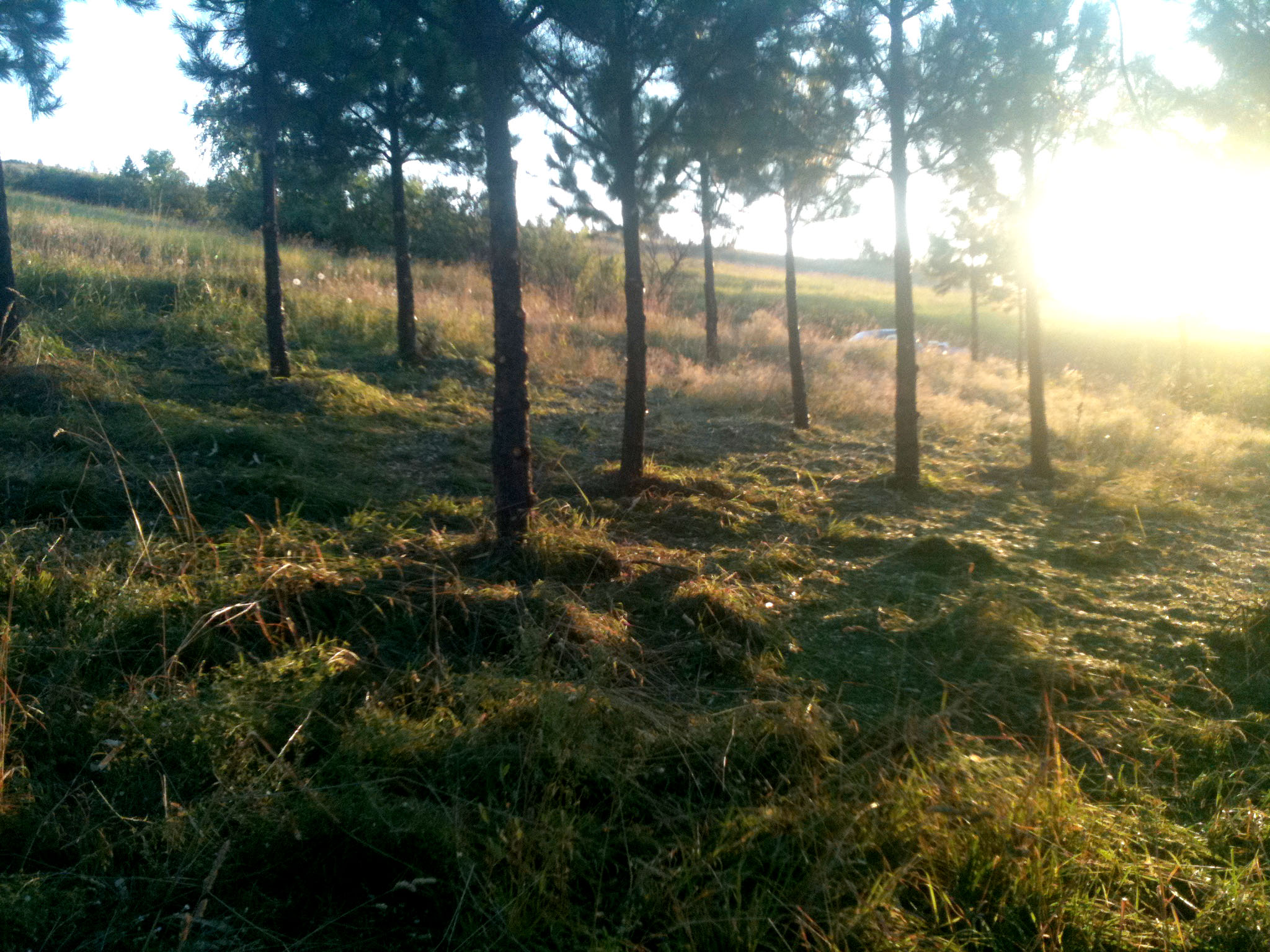 logging-forestland2.jpg