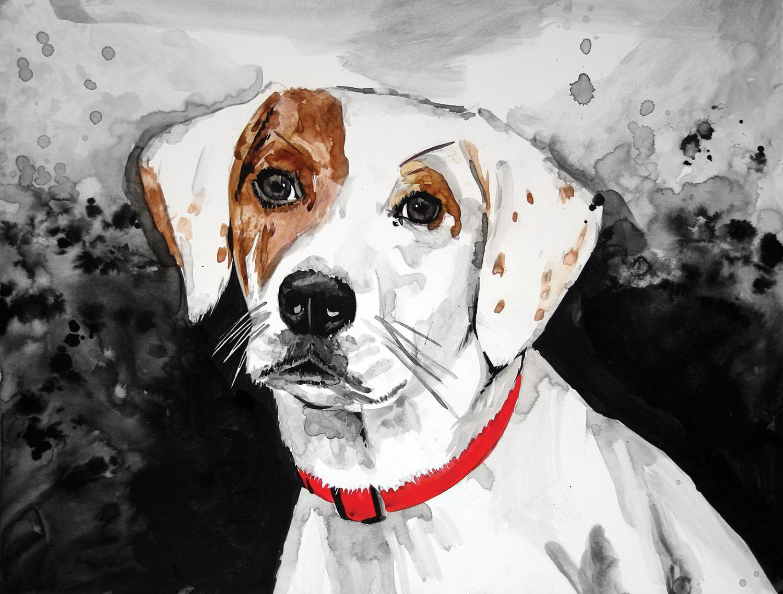ALLIE_DOG.jpg