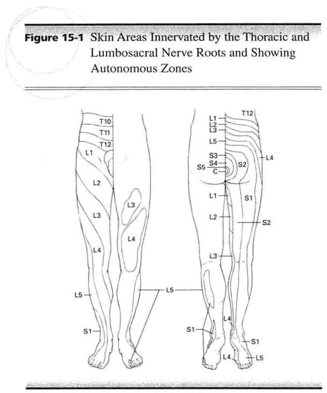 AMA Guides, Fig 15-1, p. 377 (5th ed. 2001)