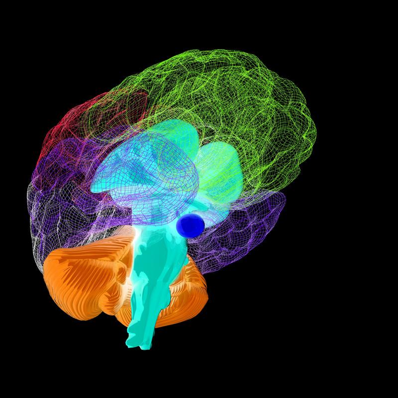 Ibogaine-in-the-Brain