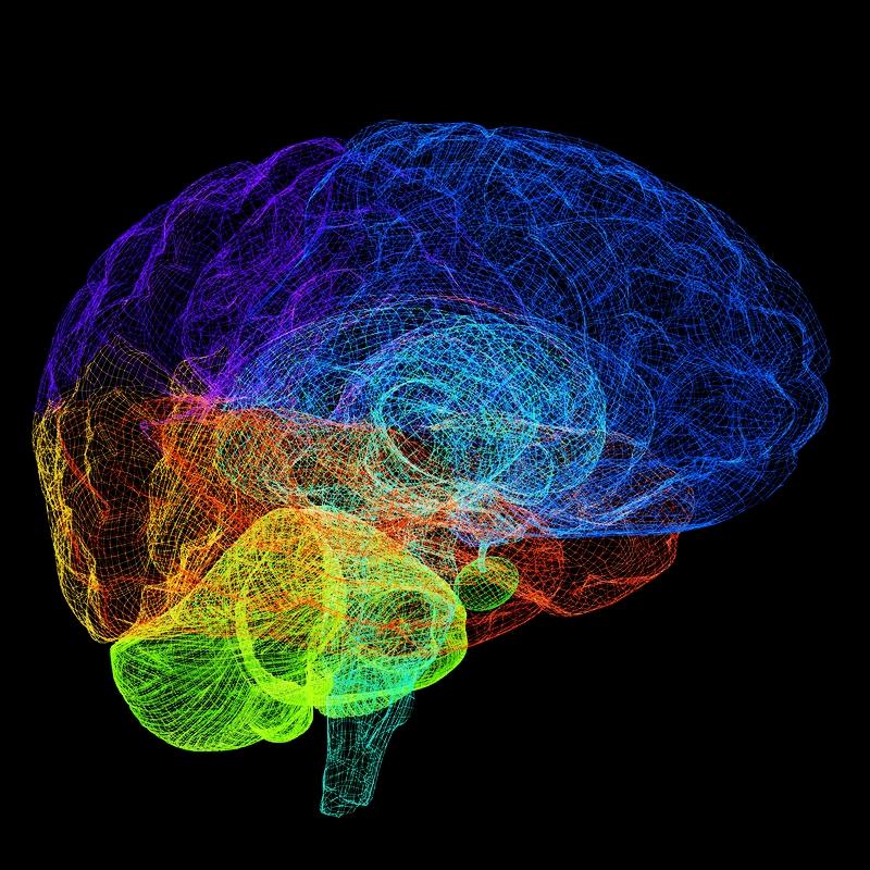 Ibogaine-Brain