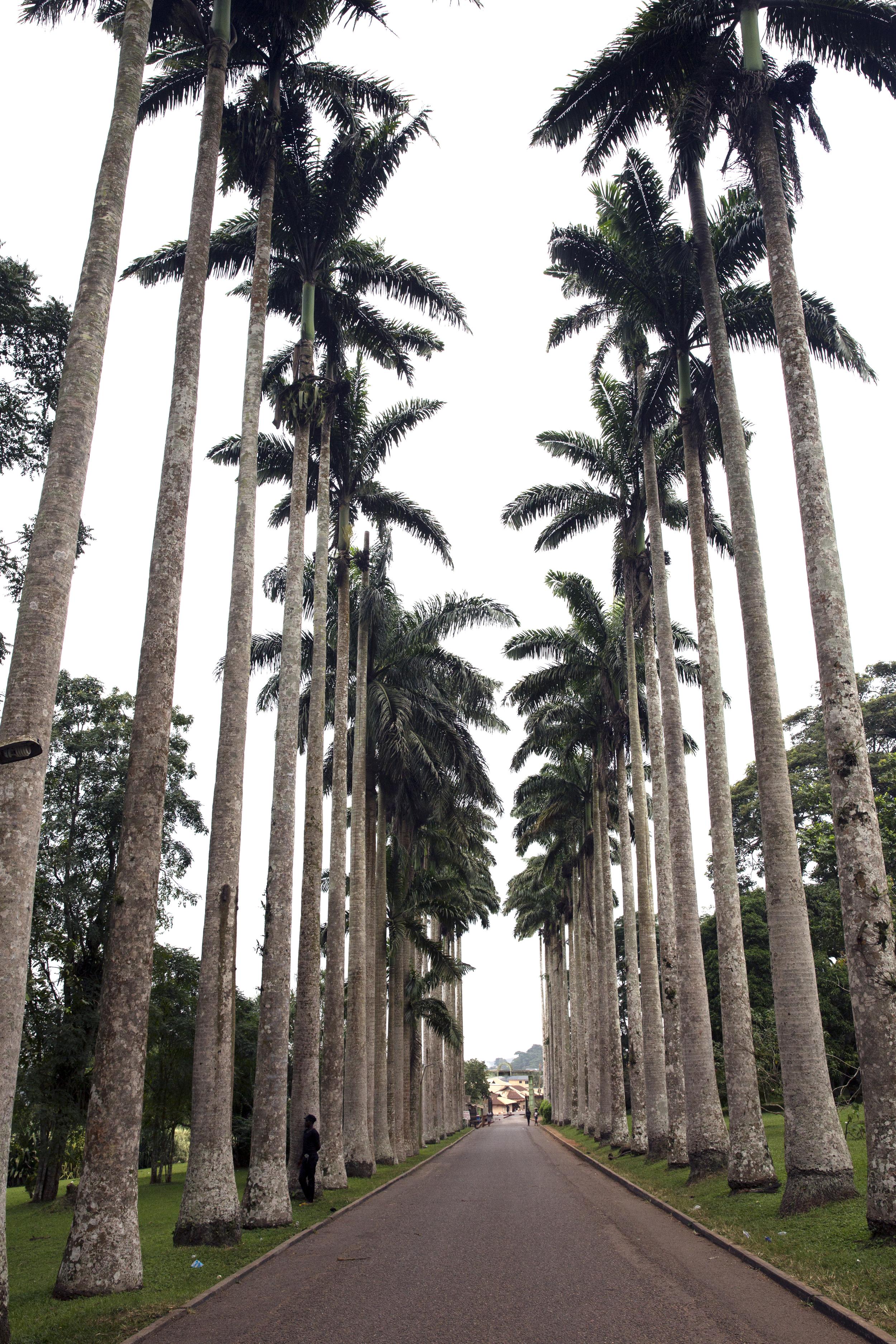 The entrance to the Aburi Gardens.