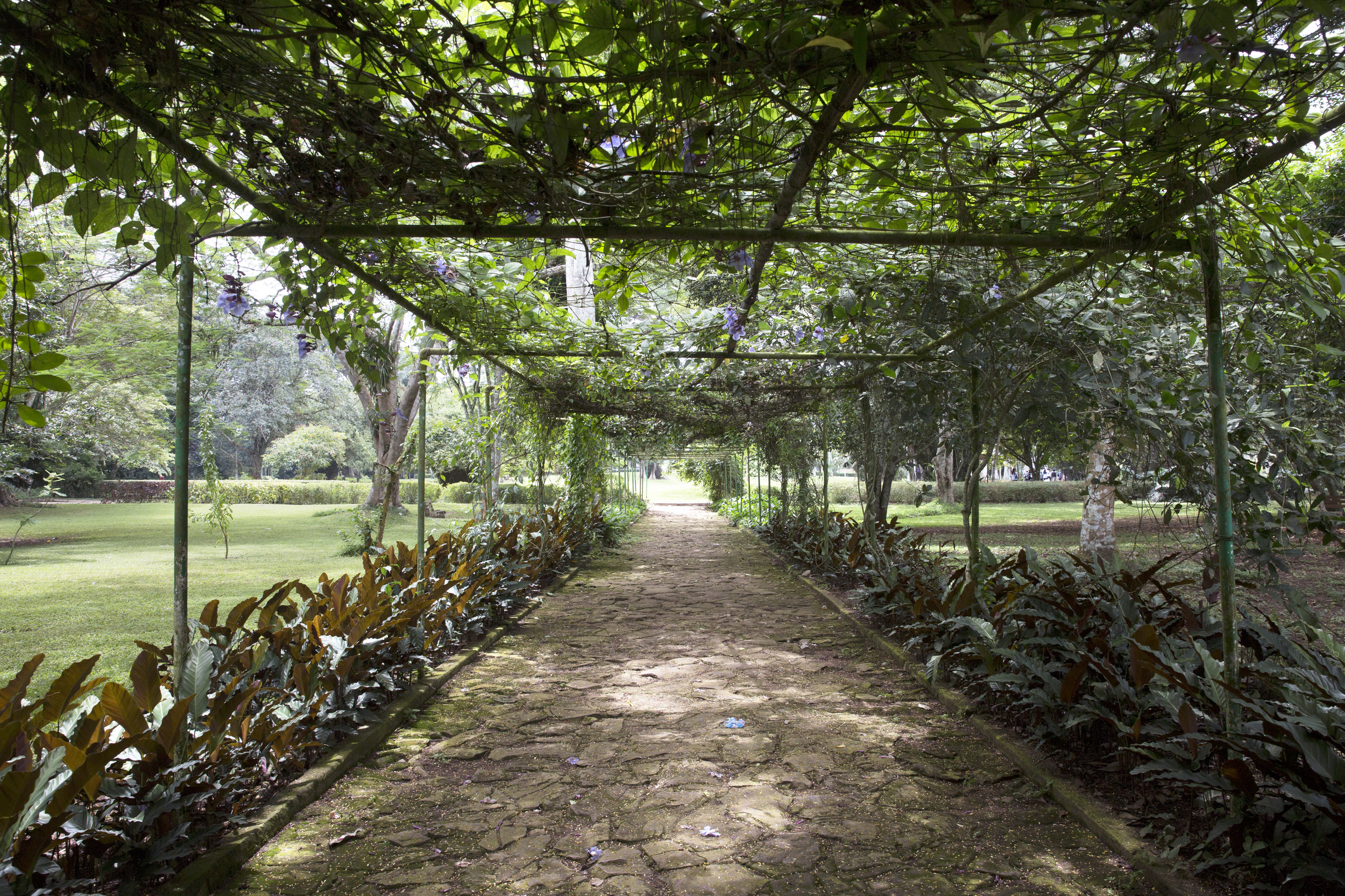 One of many beautiful walkways within the gardens.
