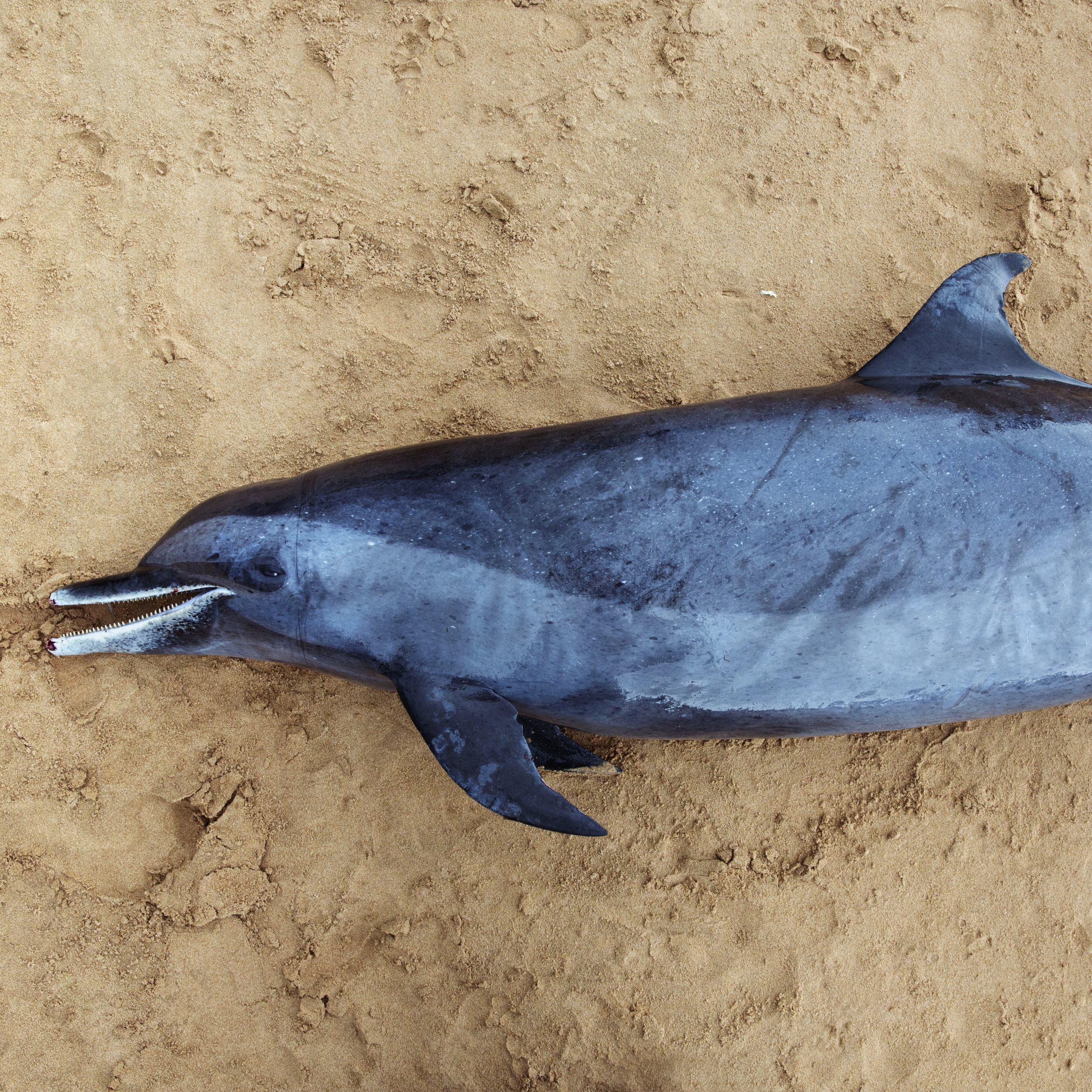 The (somewhat-happy-looking? cute?) dead dolphin...