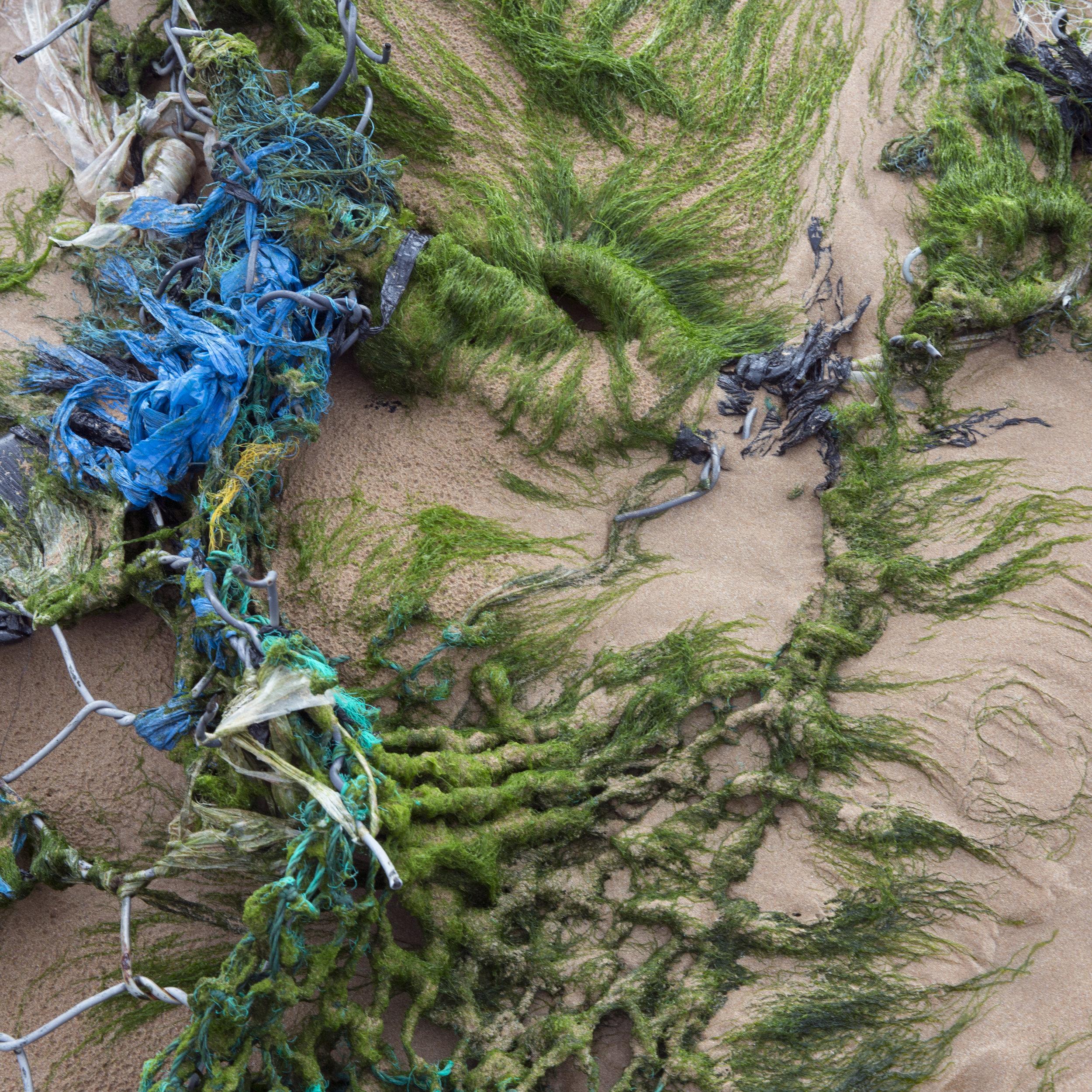 Strangely pretty beach-side trash