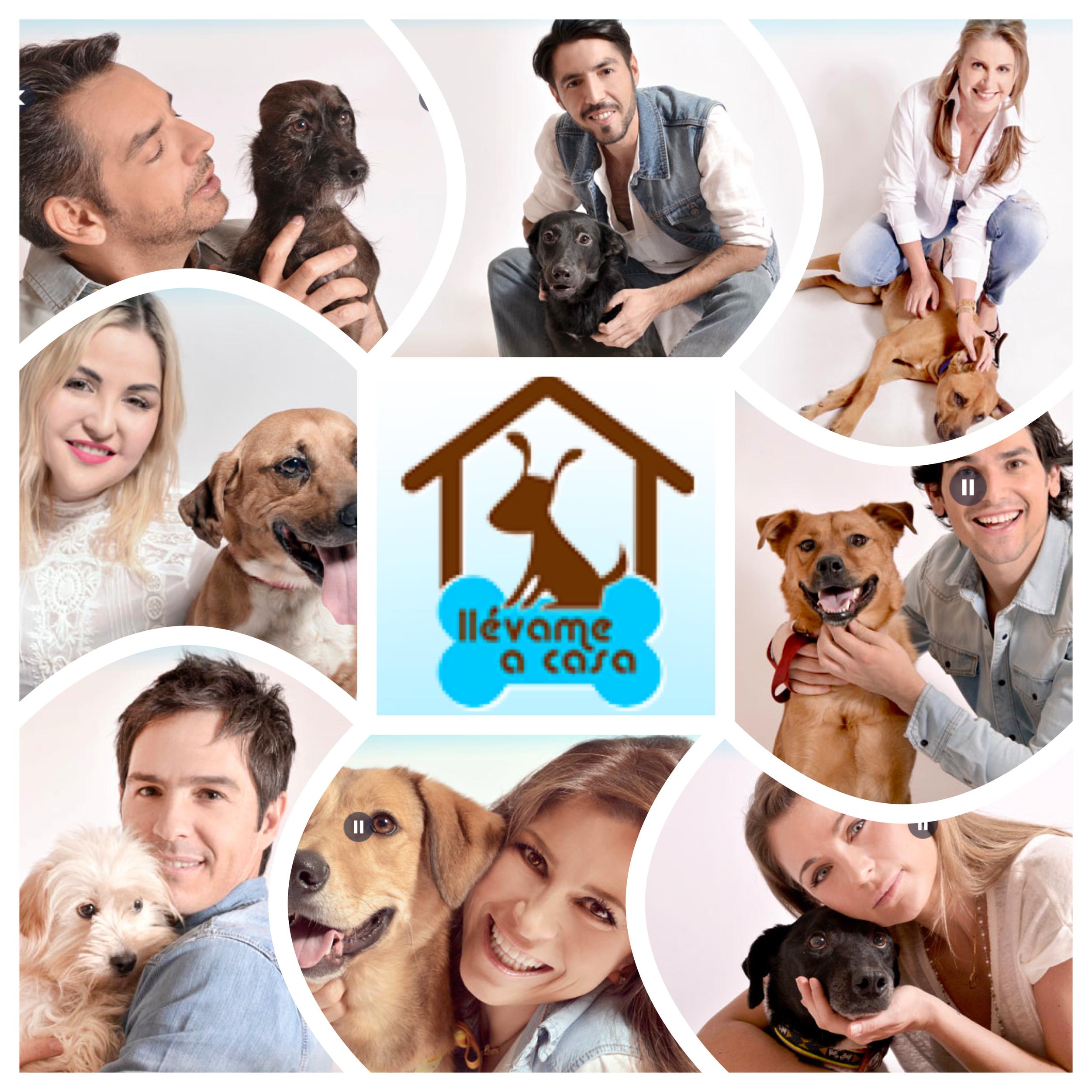 """Campaña """"Llevame a casa"""" en pro de la adopcion de los perros y gatos callejeros Julio 2014"""