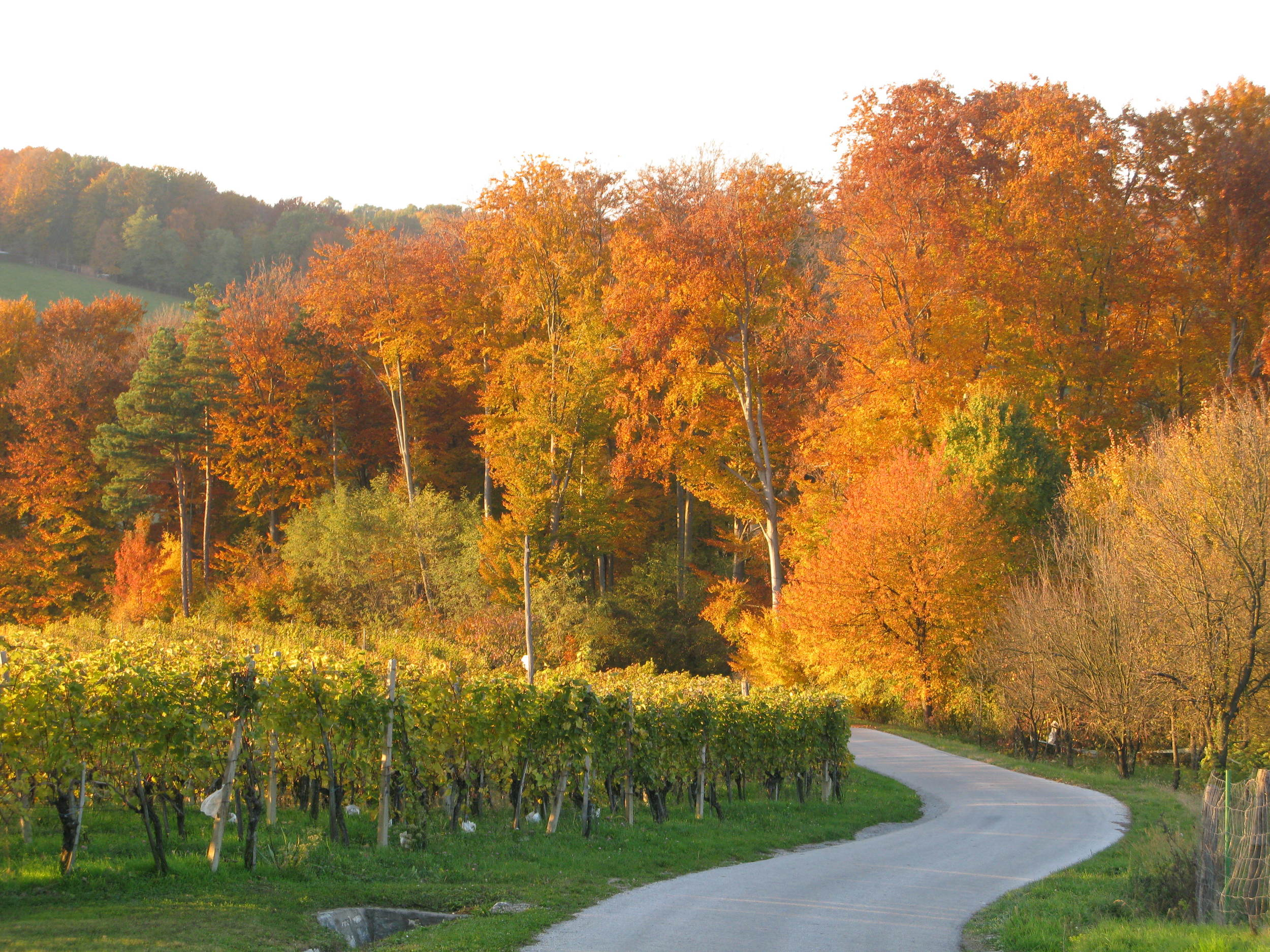 The autumn is a great time to visit