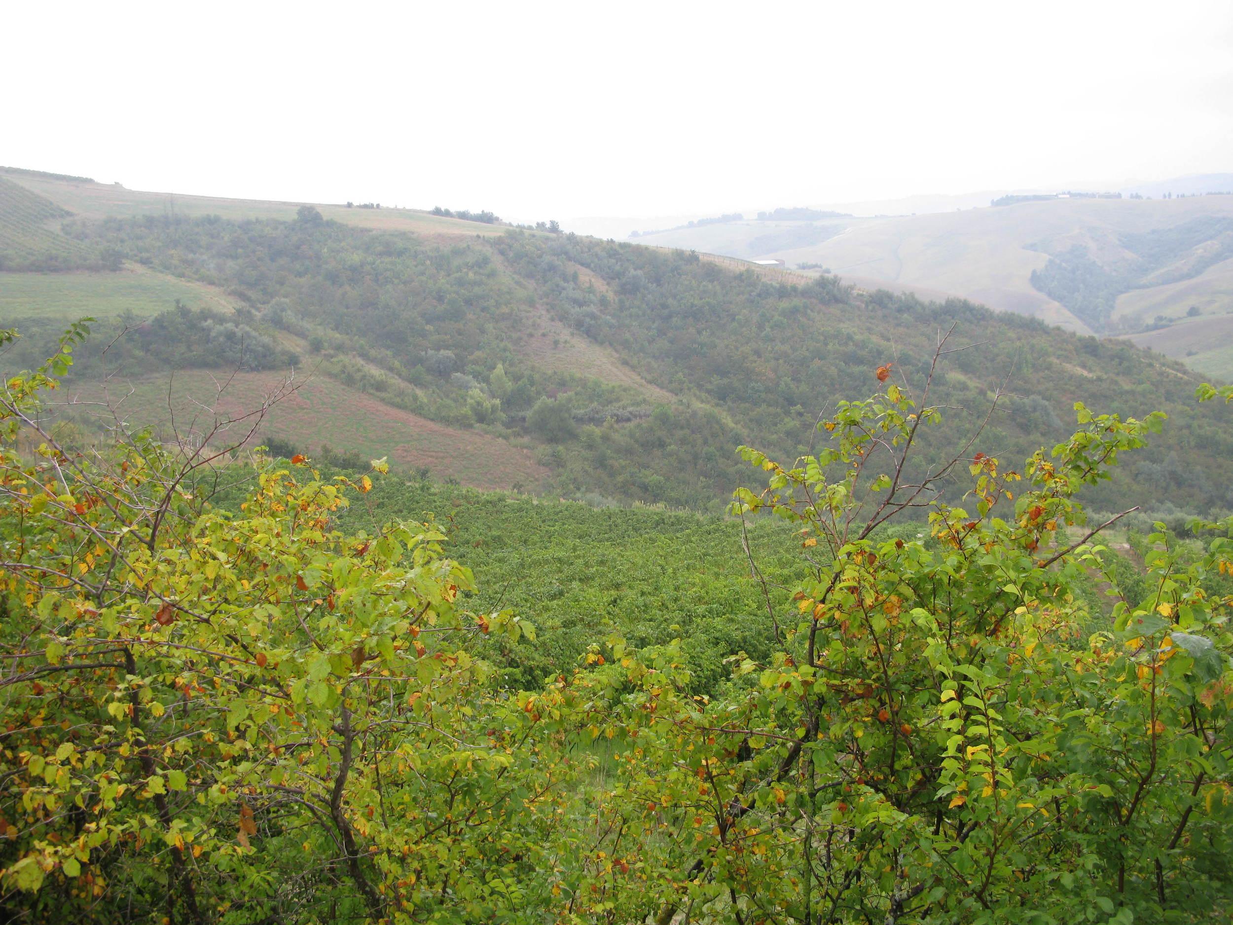 The highest Famoso vineyard