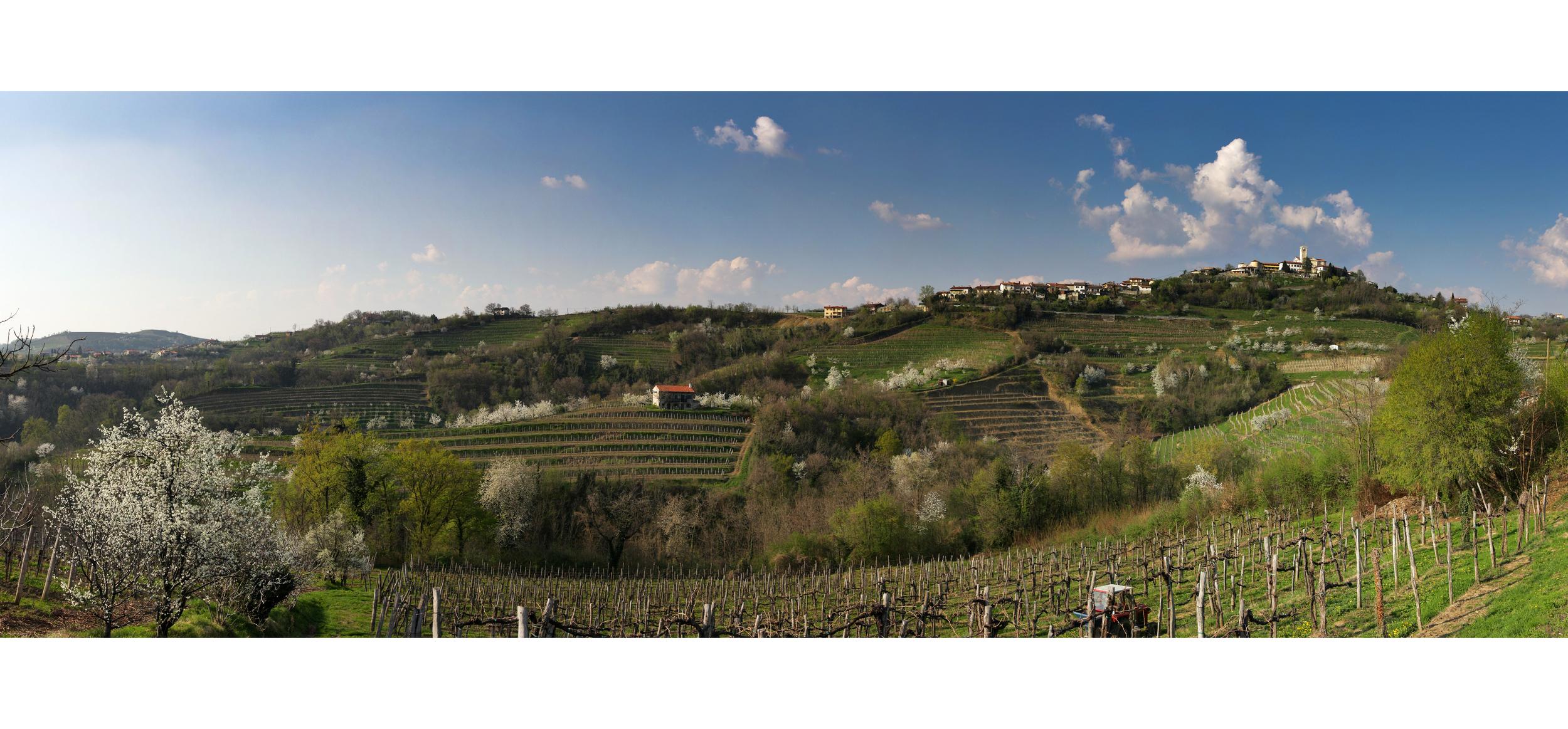 Goriška Brda is a stunningly beautiful wine region, close to Slovenia's border with Italy