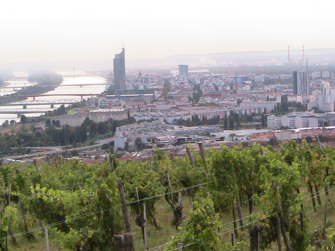 The vineyards overlook the city and Danube