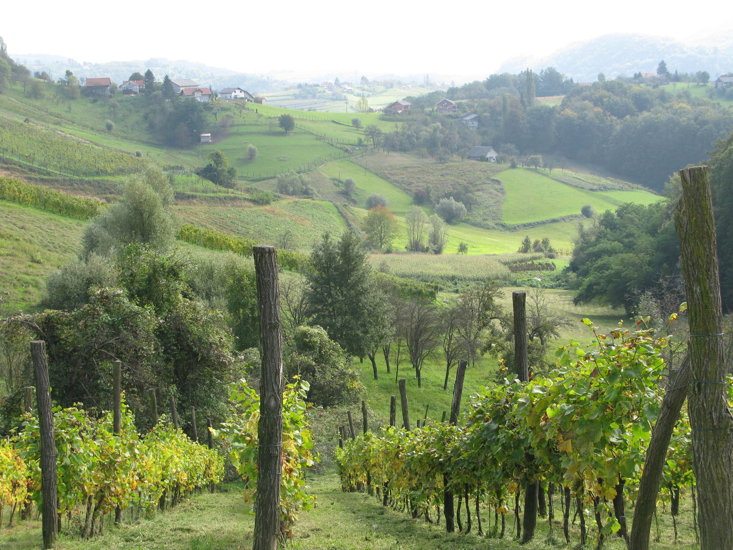 Zagorje is a pretty area often overlooked by tourists and wine lovers. But Bodren's vineyards show what the area can do